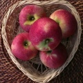 Apples - Florina