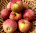 Apples - Stayman