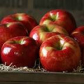Apples - Honey Crisp